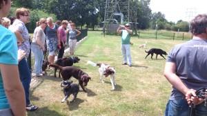 Hondenspeelveld